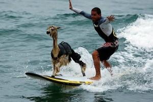 afvallen met surfen