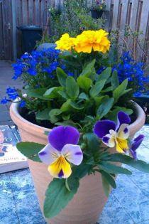 stralend mooi, net als deze bloem