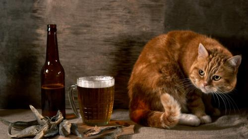 drinken als vetmaker