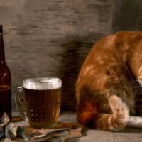 Alcohol en Afvallen