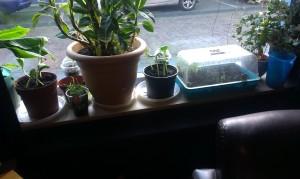 kruiden en groentes kweken